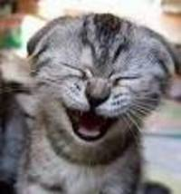 Cat_laugh